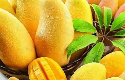 吃芒果过敏怎么办?芒果过敏的原因和症状及解决方法