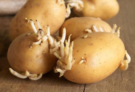 土豆发芽不能吃就得扔?教你四种巧用发芽土豆的实用小妙招