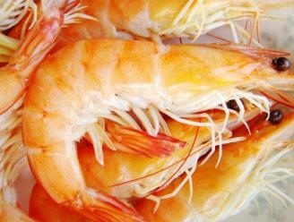 广东湛江五大土特产品 对虾肉嫩特别味美营养丰富