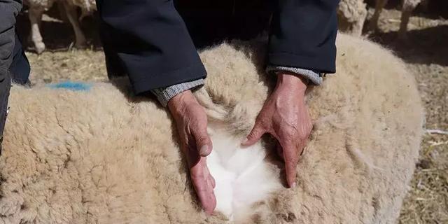 """青海人的""""羊系列""""美食 青海羊肉美食已成为青海风味名菜"""