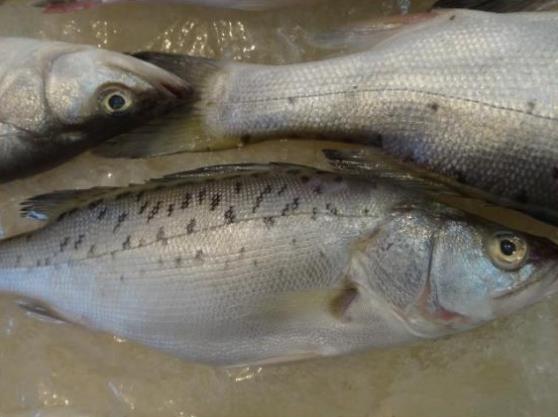吃鲈鱼的禁忌有哪些?鲈鱼是淡水鱼还是海鱼?鲈鱼多少钱一斤?