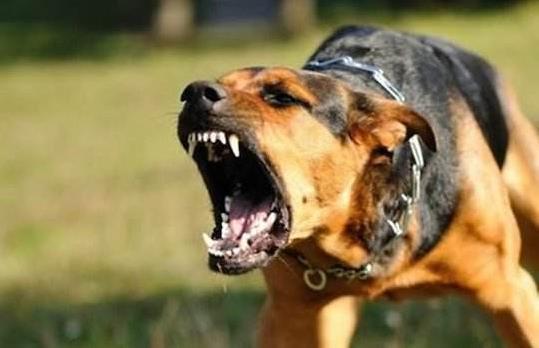 被狗咬了一定得狂犬病吗?被狂犬咬伤后是否发病?