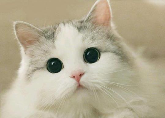 猫咪突然爱睡觉是怀孕了吗?猫咪出生后多久会走?