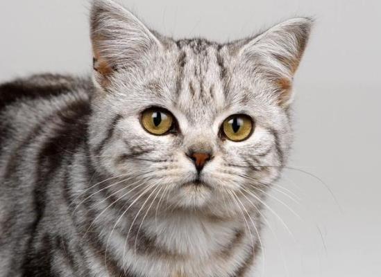 猫咪真菌感染会传染人吗?猫拉出白色虫子会传染人吗?