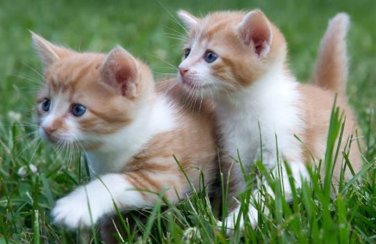 猫咪为什么要定期驱虫?猫咪真菌感染和猫癣有区别吗