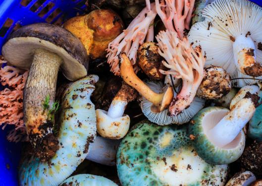 野生菌中毒有什么症状?食用野生菌中毒主要原因