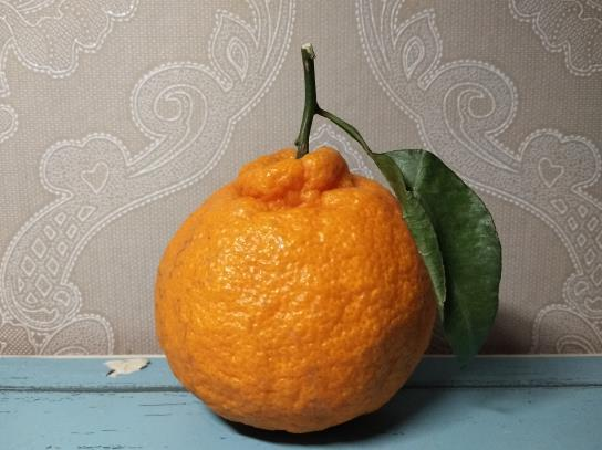 什么样的丑橘比较好吃?丑橘什么时候是应季